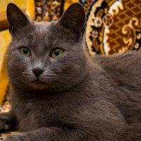 "Кошка ""Лиза"" :: Сергей Гибков"