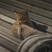Кисловодский кот :: Денис Собкалов