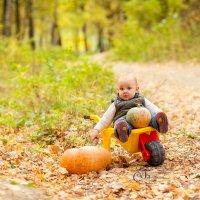 Осень :: Светлана Бурман