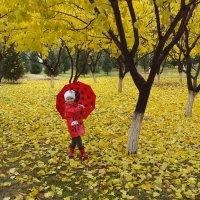 Осень в разгаре :: Дмитрий Рузаев