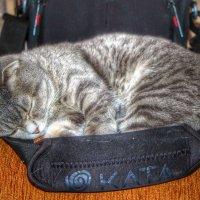 Варя спит, она устала...... :: Ольга Ламзина