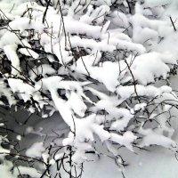 зима,снег :: Татьяна Королёва