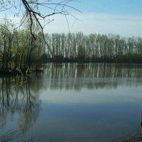 Тишина на Бобровской протоке :: Виктор Гузеев