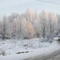 Зимний Санкт-Петербург :: Дарья Селянкина