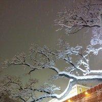 Дерево в снегу :: Oksana Osipova