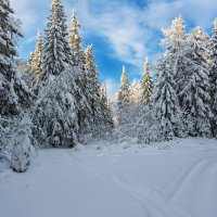 Лесные красавицы :: vladimir