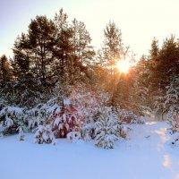 Мороз и солнце, день чудесный !!!!!! :: Hаталья Беклова