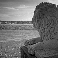 Мой любимый лев :: Ольга Мальцева