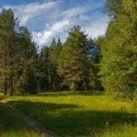 Дорога через лес :: Валентин Котляров