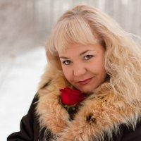 Роза на снегу (12) :: Алексей Волков