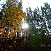 Слева осень справа лето ))) :: оксана савина