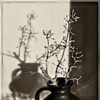 Любовь отбрасывает тень на всё :: Ирина Данилова