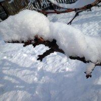 Снежок на ветке :: Татьяна Пальчикова
