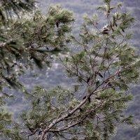 Бисер дождя :: Ольга