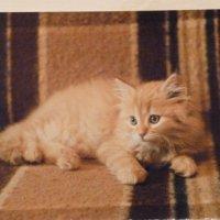 Кошки :: шубнякова