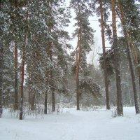 заметает зима, заметает... :: Галина Флора
