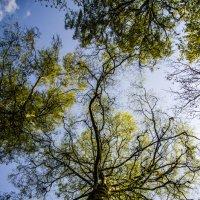 Дерево :: Lemis ...