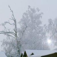 Зимний день 1 :: Валерий Талашов