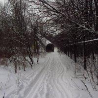 IMG_9866 - Зима в Лосином острове :: Андрей Лукьянов