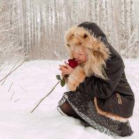 Роза на снегу (08) :: Алексей Волков