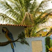 Бразилия. Абаджания (по улицам поселка) :: Сергей Глотов