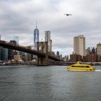 NYC3 :: Gotardo Ro