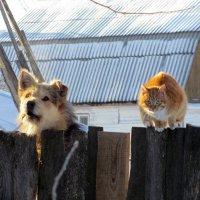 Ну, что смотришь?... Это наш дом! :: Нина Синица