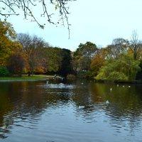 Осенний парк. :: zoja