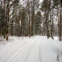 По дороге в лес. :: Юрий Бичеров