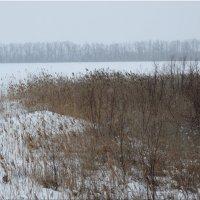 Зима за городом... :: Тамара (st.tamara)