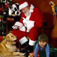 Вместо подарка в мешке Деда Мороза :: Marina Timoveewa