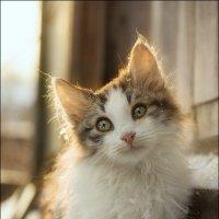 Котик - мягонький животик :: Наталья Шевелева