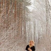 Роза на снегу (03) :: Алексей Волков