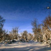 Зимний лесок :: Константин Филякин