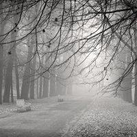 Утро туманное... :: Виктория Павлова