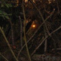 Закат в ноябре :: sergej-smv