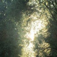 солнечный свет :: tgtyjdrf