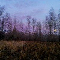 Закат.Поздняя осень. :: Сергей Бажов