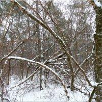 Чудеса зимнего леса... :: Тамара (st.tamara)