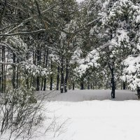 Лес зимой :: Юрий Стародубцев
