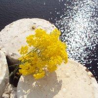 Весна :: Яна