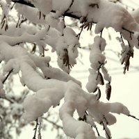 снег :: Елена Константиниди