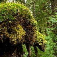 Лесные чудеса 5 :: Валерий Талашов