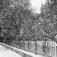 Ограда :: Оксана Пучкова