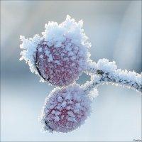 Зимнее убранство :: Swetlana V