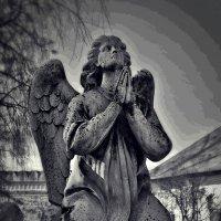 ангелы поют на небесах... :: Дмитрий Анцыферов