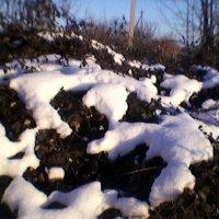 Снег :: Миша Любчик