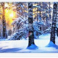 Красота зимнего леса :: Лидия (naum.lidiya)