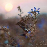 Цветочное поле :: Lidiya Oleandra
