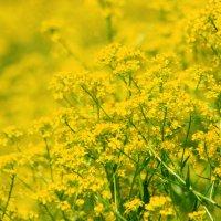 Желтое марево... :: юрий